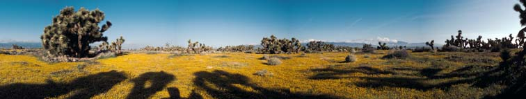 Lockett Photography wildflower panoramas