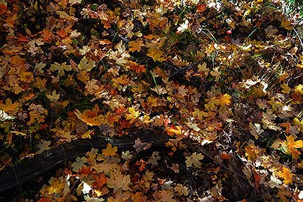 Mogollon Rim, October 23, 2014