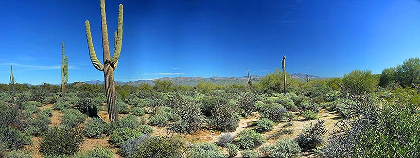 McDowell Mountain Regional Park, February 12, 2015