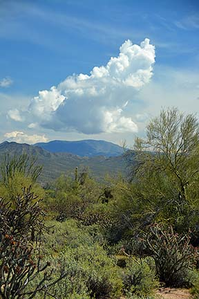 Cumulus cloud, McDowell Mountain Regional Park, March 20, 2015