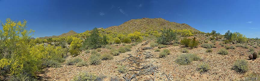 Wildflowers at San Tan Mountain Regional Park, April 9, 2015
