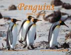 Penguins: 2009 Calendar