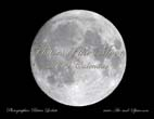 Phases of the Moon: 2009 Calendar