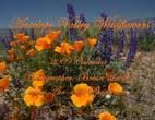 Antelope Valley Wildflowers: 2009 Calendar