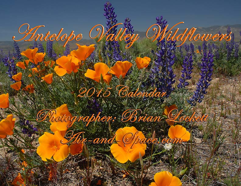 Lockett Books Calendar Catalog: Antelope Valley Wildflowers